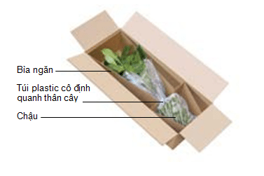 huong-dan-dong-goi-hoa-tuoi-cay-canh-tai-vietair-cargo-5 Hướng dẫn đóng gói hoa tươi, cây cảnh tại VietAir Cargo