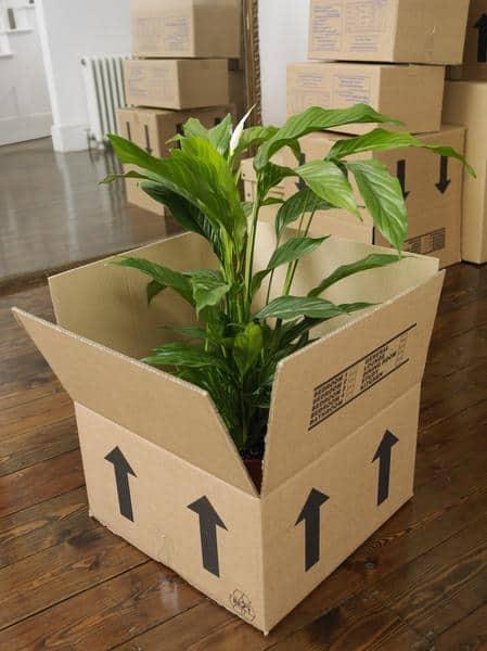 huong-dan-dong-goi-hoa-tuoi-cay-canh-tai-vietair-cargo Hướng dẫn đóng gói hoa tươi, cây cảnh tại VietAir Cargo