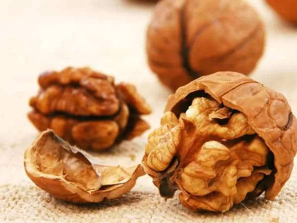 hat-oc-cho 3 loại hạt cung cấp nhiều dinh dưỡng tốt cho Mẹ Bầu và thai nhi
